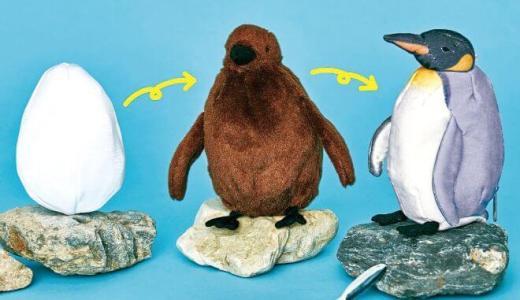 オウサマペンギン3変化ぬいぐるみ|再入荷はいつ?予約や在庫状況も調査