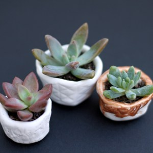 pinch-and-sprout-pots