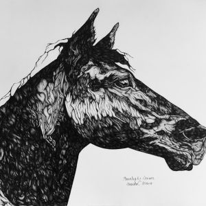 intro-to-drawing_-the-body-and-spirit-of-the-horse-teen_amanda-herbert-1