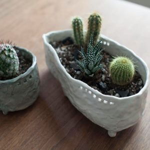succulent-homes-for-teens_kirsten-schiel