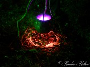 A purple potion simmering over hot, glowing coals