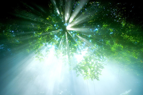 Grounding your LIGHT: For a Healthy Awakening (1/2)