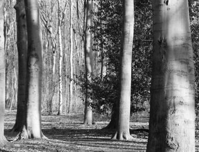 A prayerful path