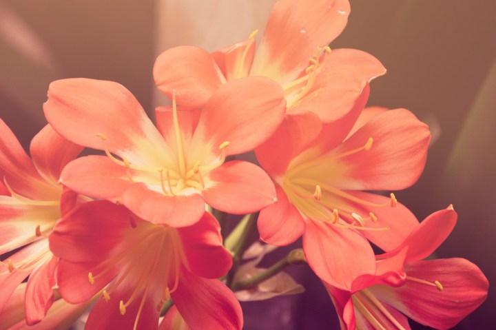 RED FLOWERSic1dX3kBQjGNaPQb8Xel_1920 x 1280