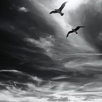 flying birds_b&w_serge-le-strat-QkMqoLwhdnY-unsplash_800SQ