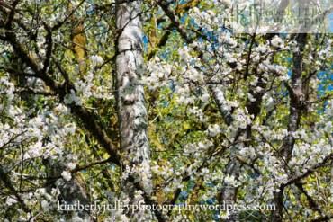 A scenic Springtime scene among trees