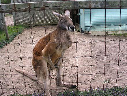 The Shameful Case of Ontario's Roadside Zoos