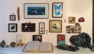 1-Natural-History-Wall