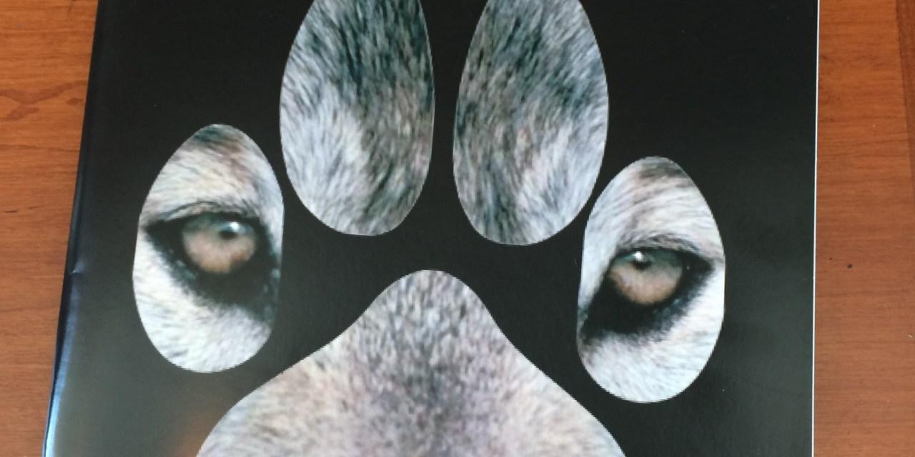 Published! My Haliburton wolf post in WOLVES Magazine