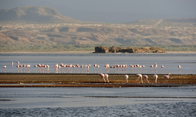 Great news from Lake Natron!