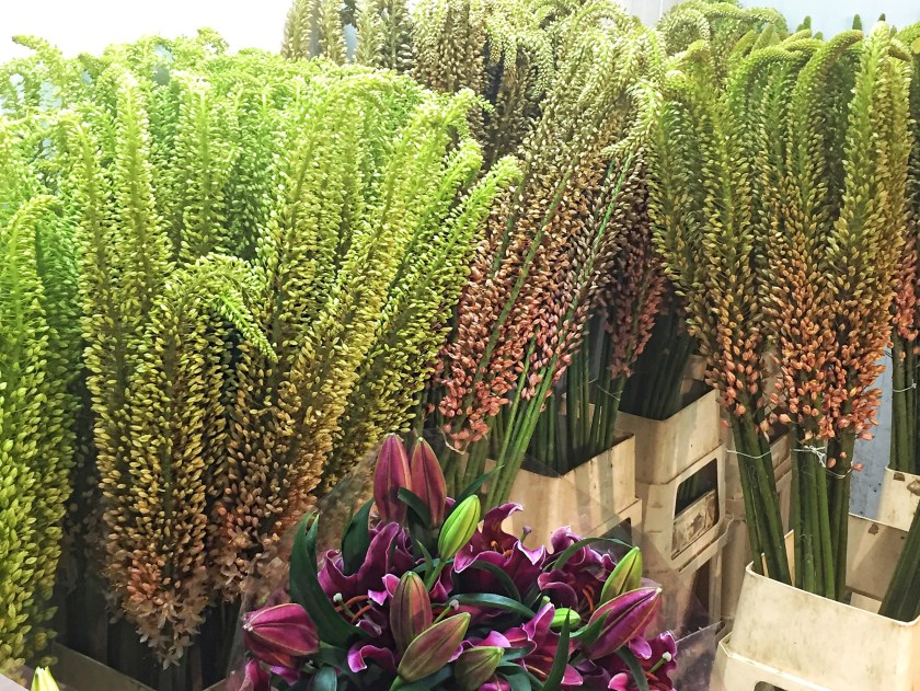 nyc flower market ombre foxtail