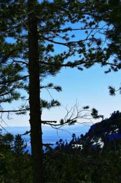tree-and-sky