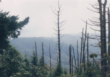 the foggy view of a mountain through trees bare of foilage