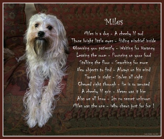 Miles poem and photo by Louise Wolfers