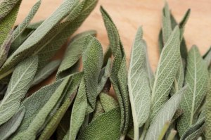 Fresh sage leaves FreeFoodPhotos.com
