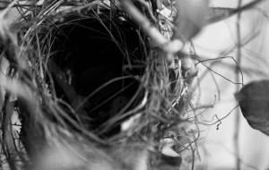 empty nest #2