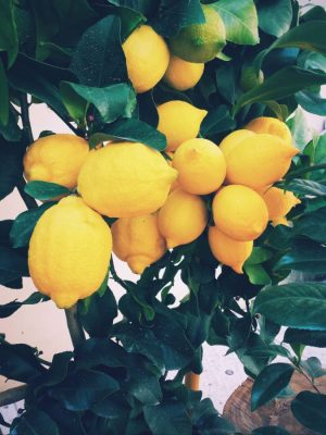 lemon tree ernest-porzi-unsplash