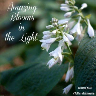 Marisa Stewart photo amazing blooms in the light