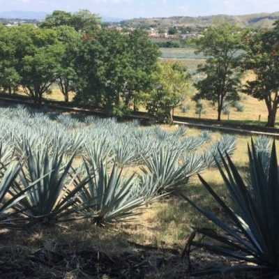 A Taste Of Tequila, Mexico