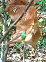 fall frog on leaf light