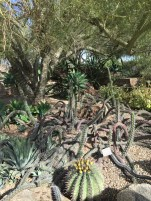 desertcactussnakes