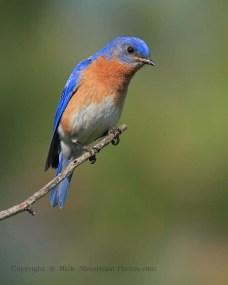 birdbluebird