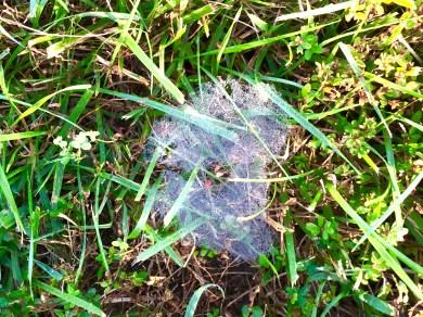 lakespiderweb