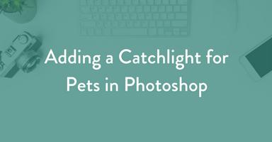 adding a catchlight, photoshop, dog photography, pet photography education