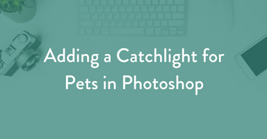 adding a catchlight, photoshop, dog photography, pet photography education