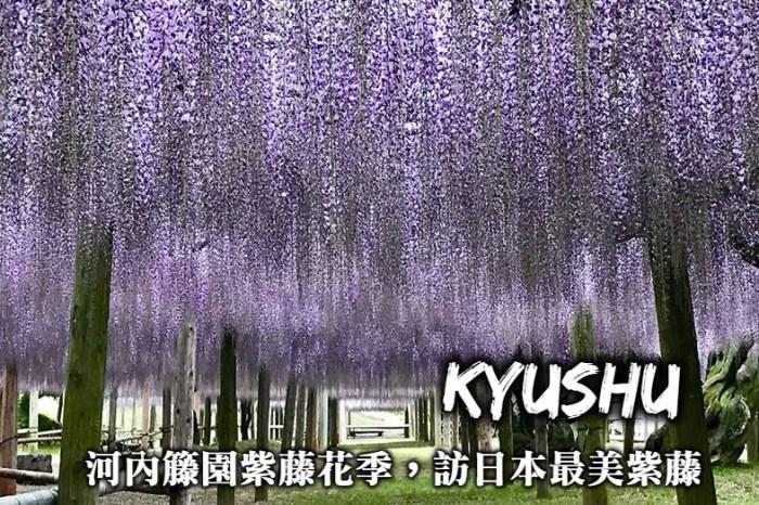 九州河內藤園紫藤花季-往返交通、購票方式、行程路線,在河內藤園欣賞最美紫藤花!