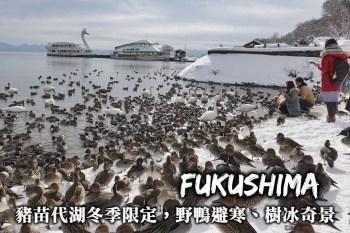 福島-豬苗代湖,天鵝野鴨避寒、樹冰奇景、周邊交通,散步於四季皆美的豬苗代湖!