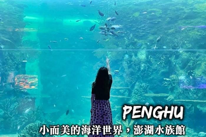 澎湖水族館-讓人驚艷的餵食秀、超好拍海底隧道,小而美的澎湖海洋世界縮影!