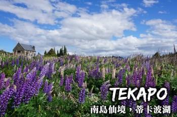 紐西蘭蒂卡波湖-好牧羊人教堂觀星、魯冰花美景,訪南島仙境蒂卡波湖(Lake Tekapo)