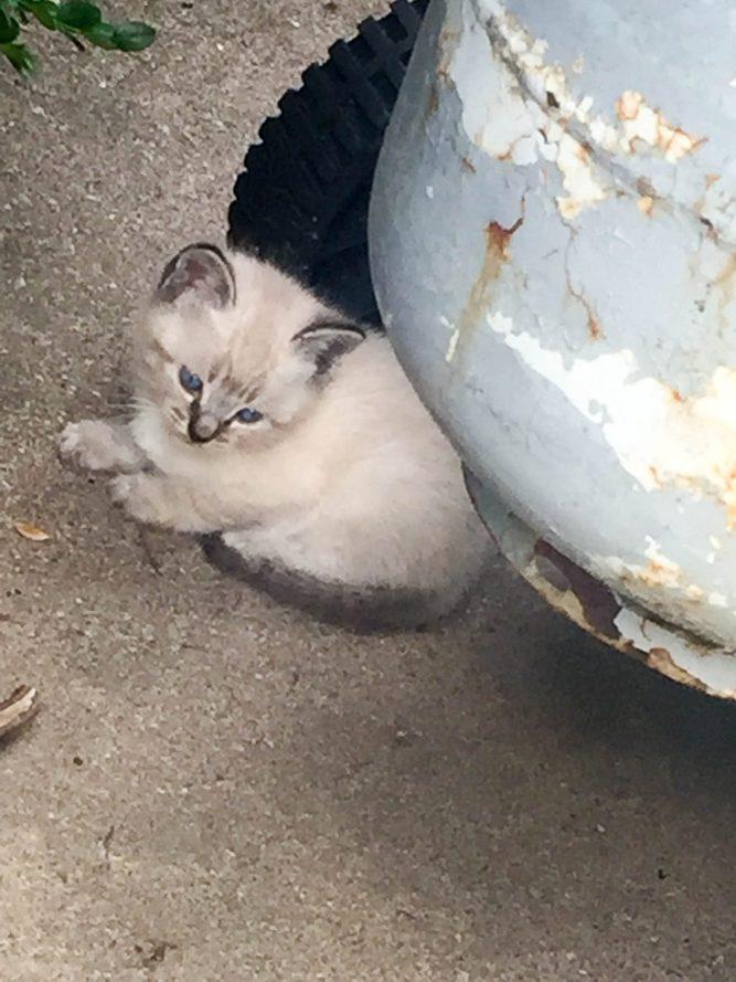 kitties-1808