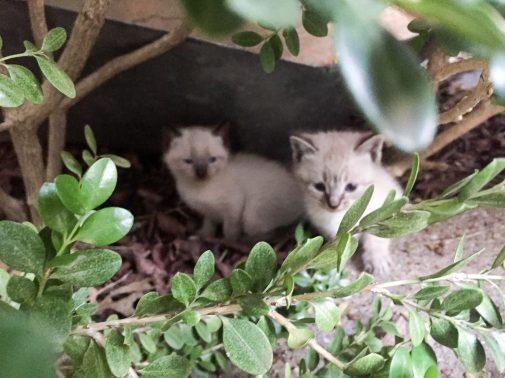 kitties-1812