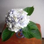 アンティーク紫陽花
