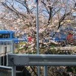 卒業式入学式桜