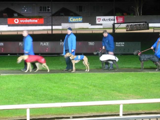 Presentatie honden hondenrace Dublin