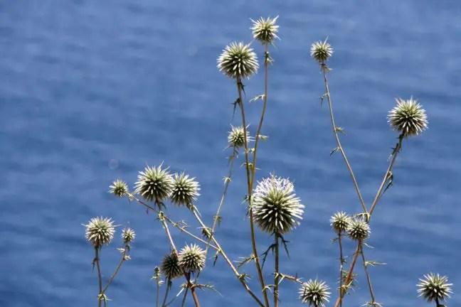 Turkse bloemenzee.