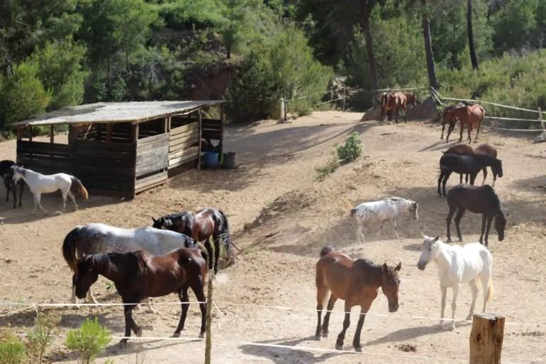 De paarden wachten op etenstijd aan de top van de vallei