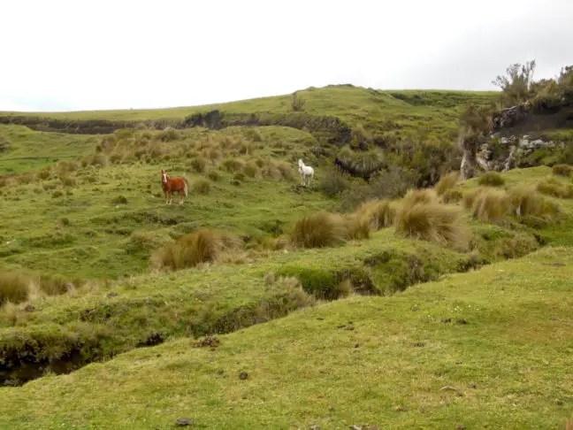 Paarden grazen rondom de vulkaan