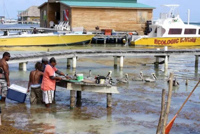 Vissers maken hun vangst schoon op Ambergris Caye