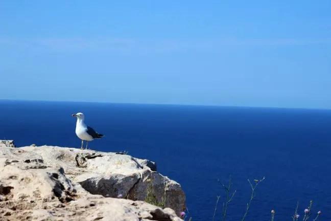 A bird's view bij Far de la Mola