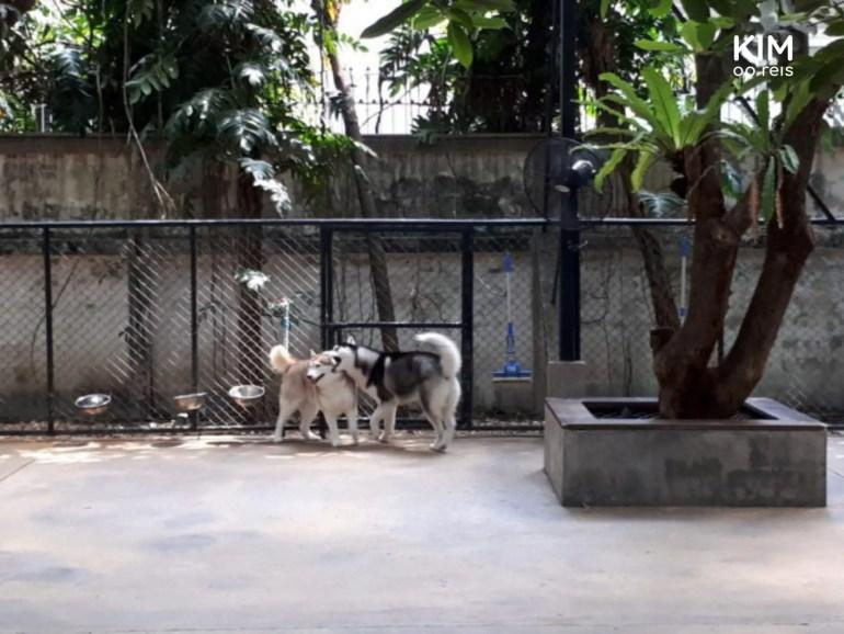 Honden in de ren bij TrueLove