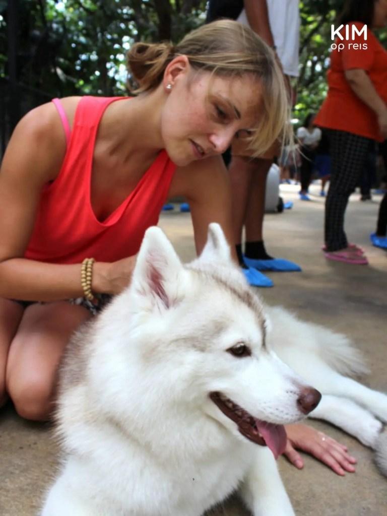 Honden knuffelen in Bangkok's hondencafé