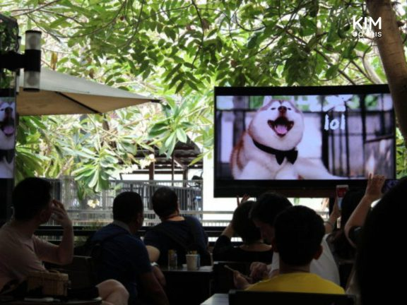 Introductiefilm kijken in het hondencafé