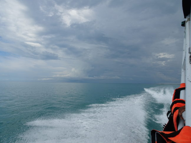 Tour walvishaaien Isla Holbox
