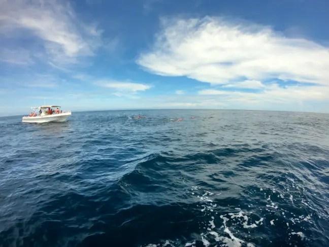 Bootjes bij de walvishaai tour