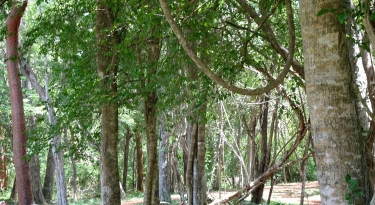 Bomen planten CO2-uitstoot
