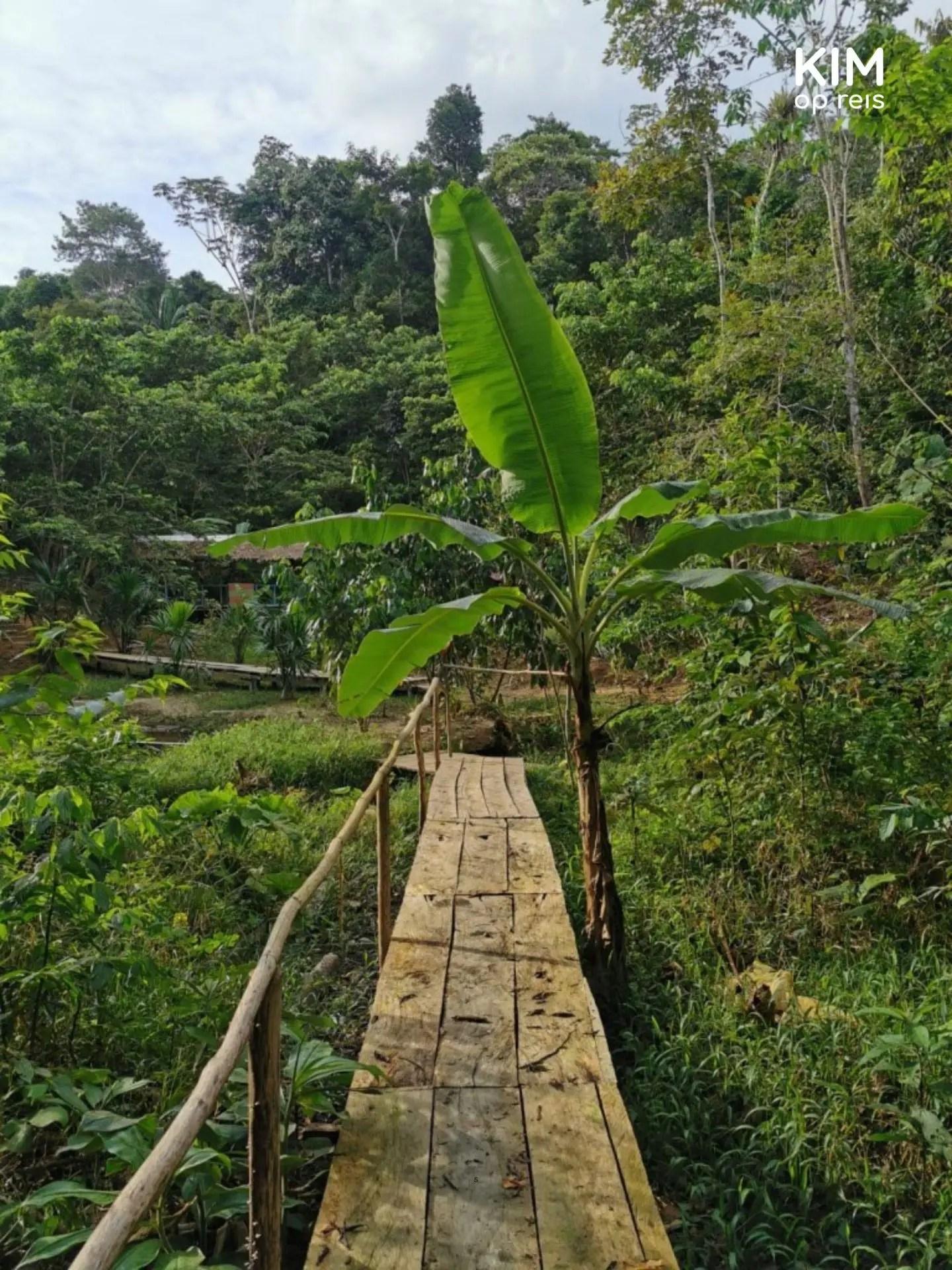 Jungle Peru Gestrand